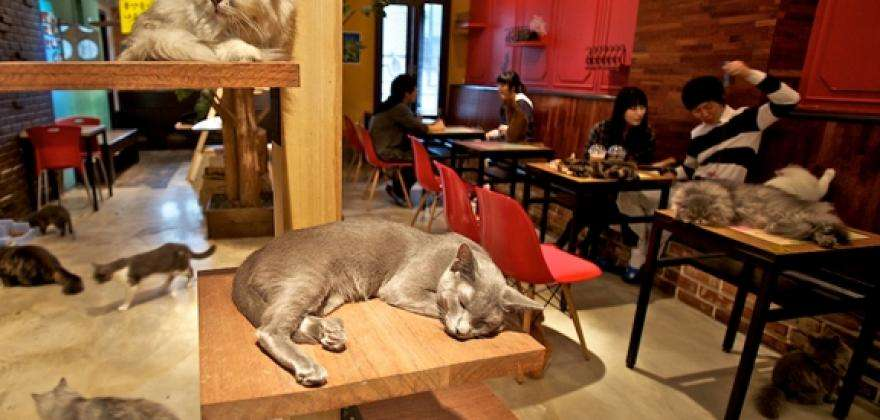 Le Café des Chats (cats bar)